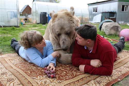 BearAbouttheHouseLivingwithMySupersizedPet-BarcroftProductions-717