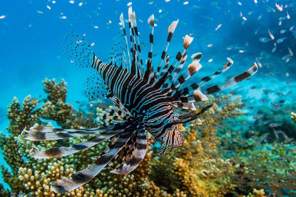 Life-on-the-Reef-Racat-BlueAnt-517